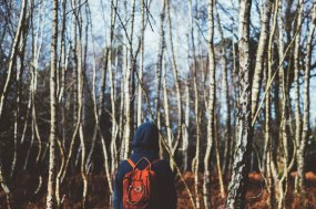 Experience forest bathing
