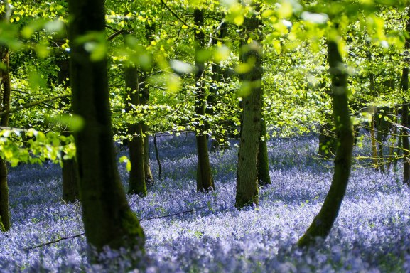 Forest of Dean in spring - photographer, Squiff Creative Media