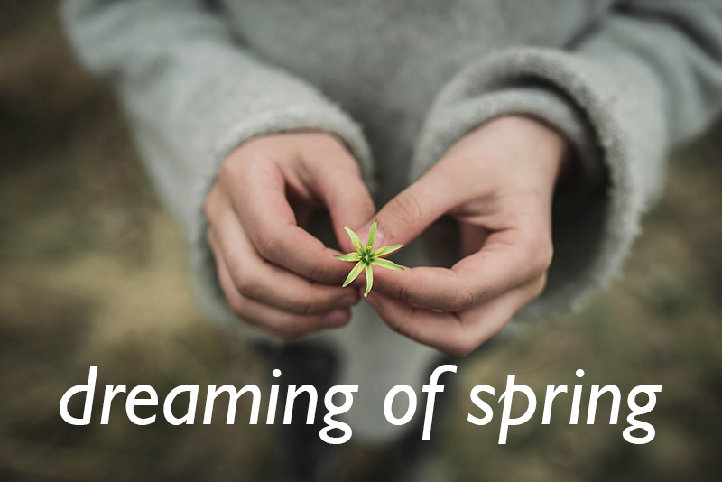 dreaming-of-spring-1.2-800px