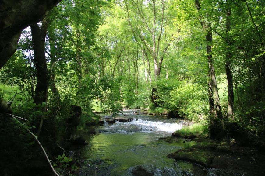 Nant-y-Bedd Forest Garden
